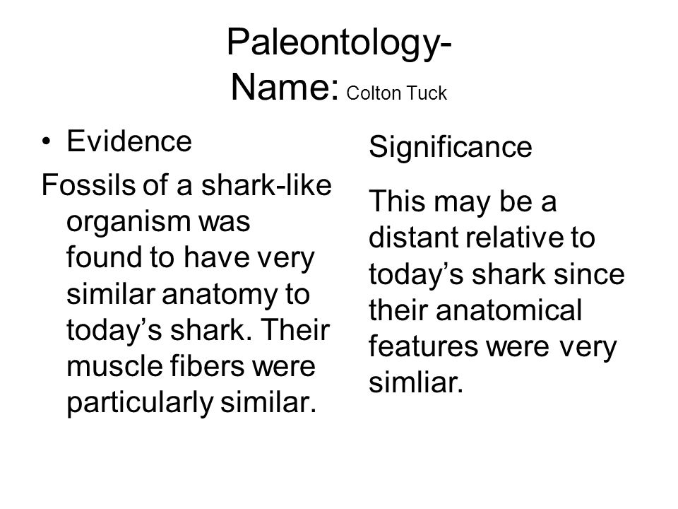 Paleontology- Name: Colton Tuck Evidence Fossils of a shark-like organism was found to have very similar anatomy to todays shark. Their muscle fibers