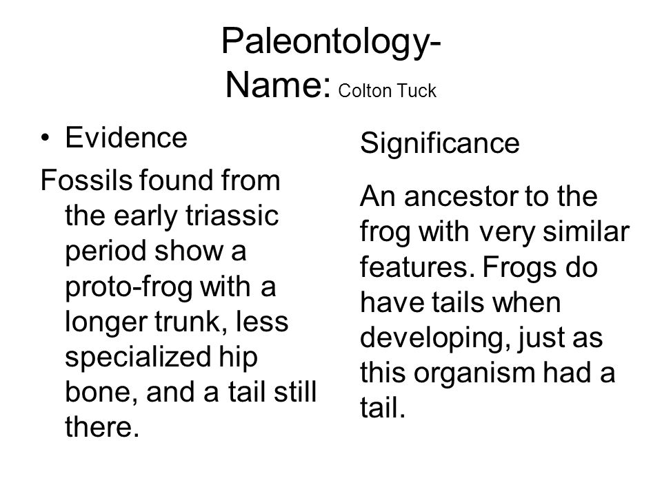 Paleontology- Name: Colton Tuck Evidence Fossils found from the early triassic period show a proto-frog with a longer trunk, less specialized hip bone