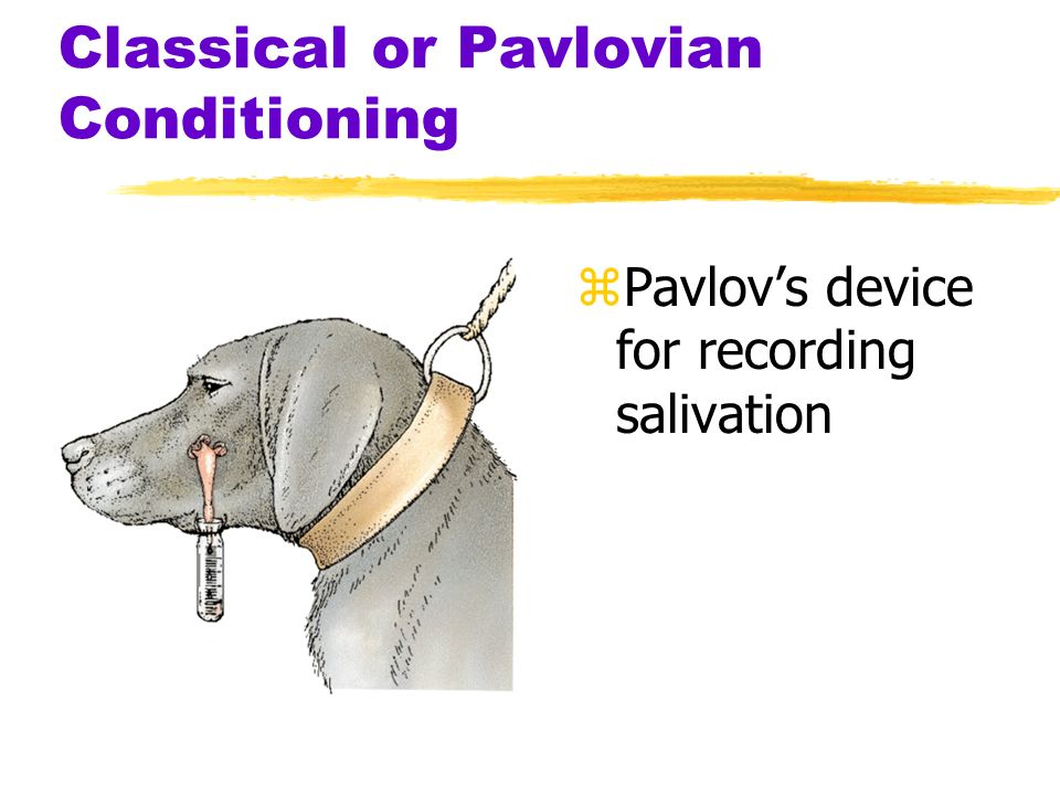 Pavlovs Classic Experiment Before Conditioning During ConditioningAfter Conditioning UCS (food in mouth) Neutral stimulus (tone) No salivation UCR (sa
