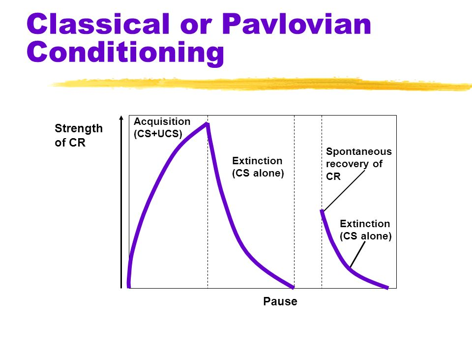 Conditioning zExtinction ydiminishing of a CR yin classical conditioning, when a UCS does not follow a CS yin operant conditioning, when a response is
