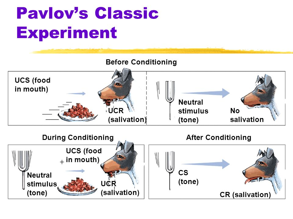 Pavlovs Classic Experiment Before Conditioning During ConditioningAfter Conditioning UCS (food in mouth) Neutral stimulus (tone) No salivation UCR (salivation) Neutral stimulus (tone) UCS (food in mouth) UCR (salivation) CS (tone) CR (salivation)