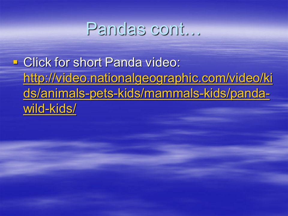 Pandas cont… Click for short Panda video: http://video.nationalgeographic.com/video/ki ds/animals-pets-kids/mammals-kids/panda- wild-kids/ Click for s