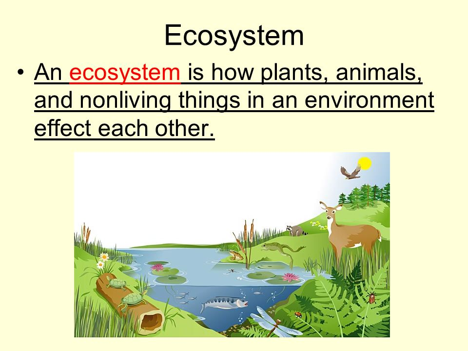 Ecosystem An ecosystem is how plants, animals, and nonliving things in an environment effect each other.