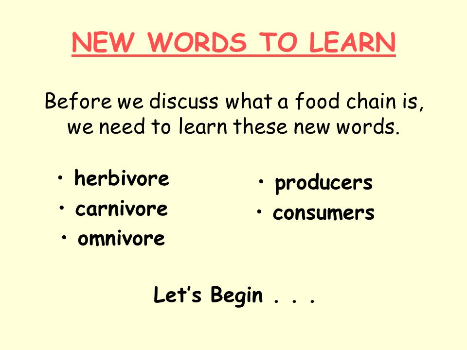 NEW WORDS TO LEARN Before we discuss what a food chain is, we need to learn these new words. herbivore carnivore omnivore producers consumers Lets Beg