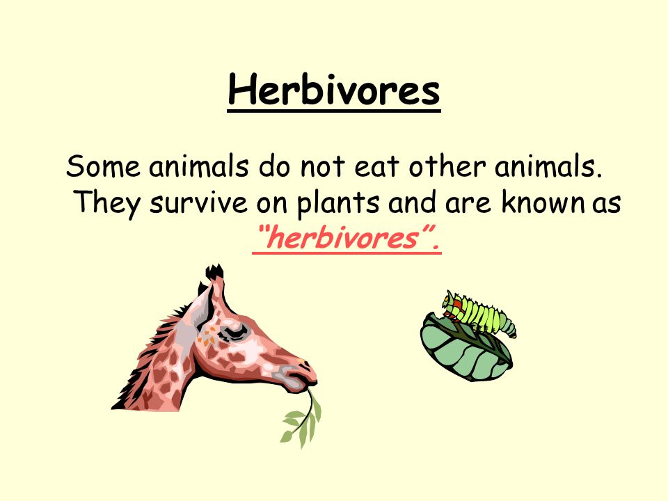 Herbivores Some animals do not eat other animals. They survive on plants and are known as herbivores.
