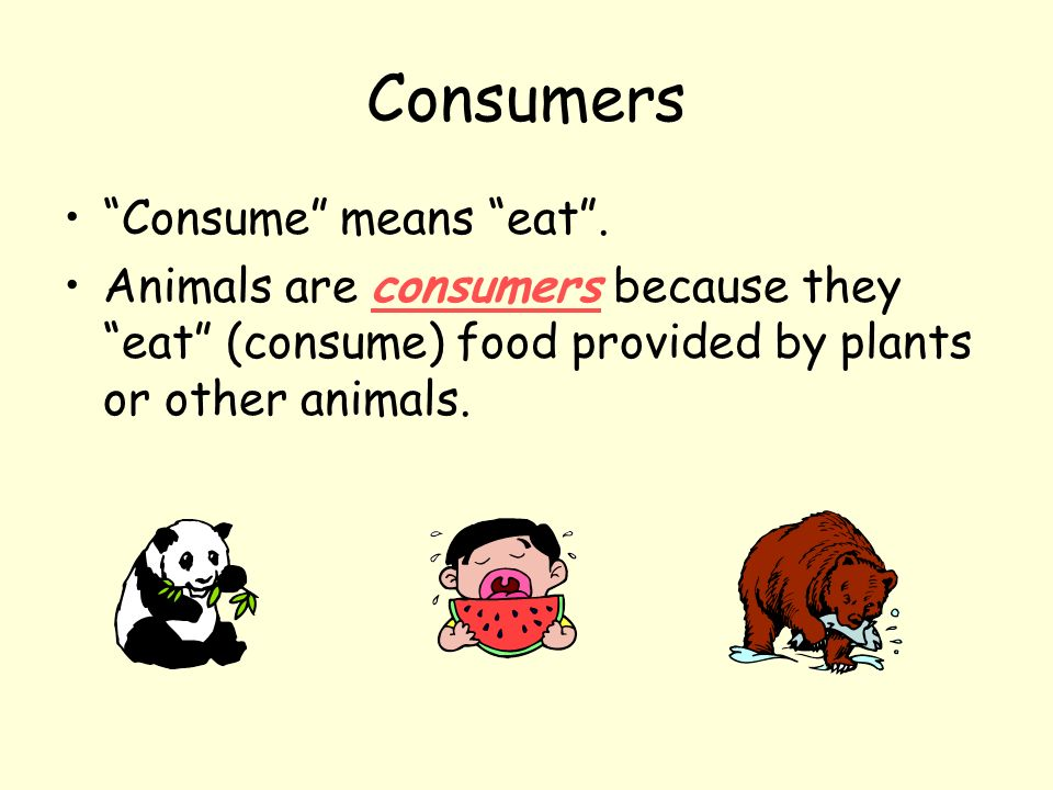 Consumers Consume means eat. Animals are consumers because they eat (consume) food provided by plants or other animals.