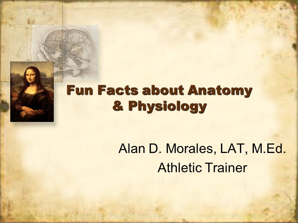 Fun Facts about Anatomy & Physiology Alan D. Morales, LAT, M.Ed. Athletic Trainer Alan D. Morales, LAT, M.Ed. Athletic Trainer