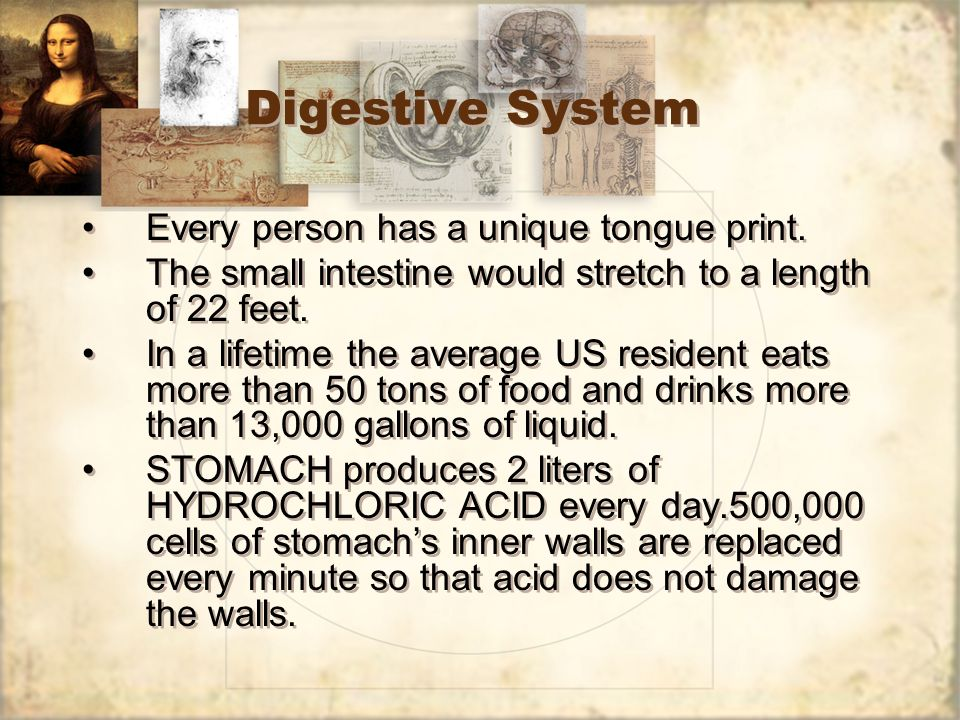 Digestive System Every person has a unique tongue print. The small intestine would stretch to a length of 22 feet. In a lifetime the average US reside