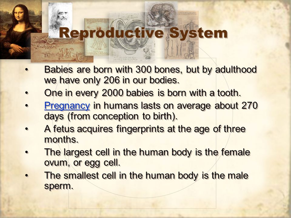 Reproductive System Babies are born with 300 bones, but by adulthood we have only 206 in our bodies. One in every 2000 babies is born with a tooth. Pr