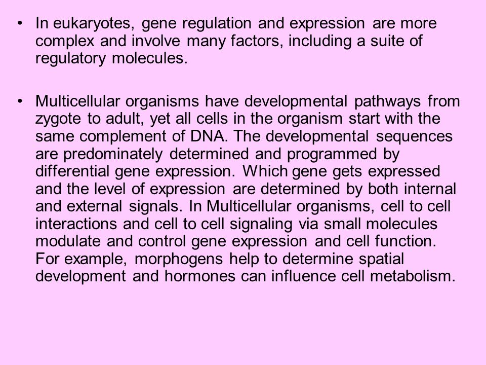 In eukaryotes, gene regulation and expression are more complex and involve many factors, including a suite of regulatory molecules. Multicellular orga