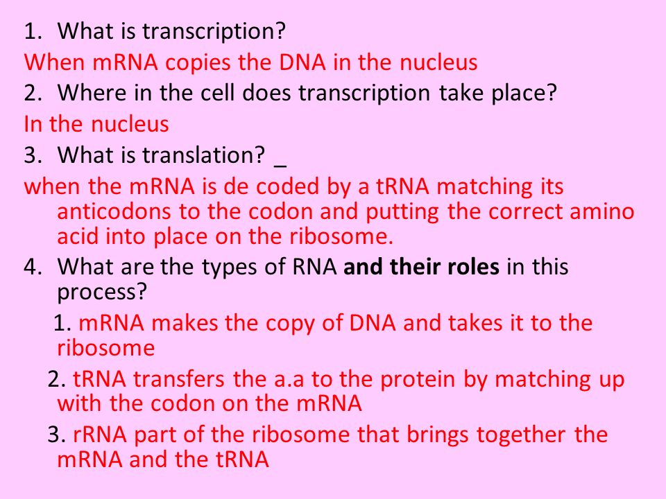 1.What is transcription? When mRNA copies the DNA in the nucleus 2.Where in the cell does transcription take place? In the nucleus 3.What is translati