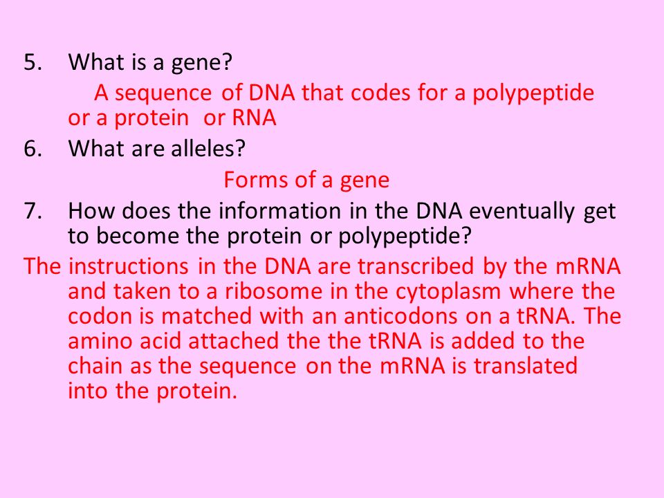 5.What is a gene? A sequence of DNA that codes for a polypeptide or a protein or RNA 6.What are alleles? Forms of a gene 7.How does the information in