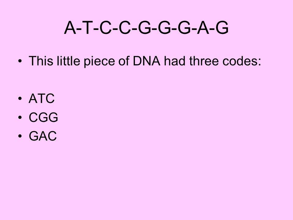 A-T-C-C-G-G-G-A-G This little piece of DNA had three codes: ATC CGG GAC