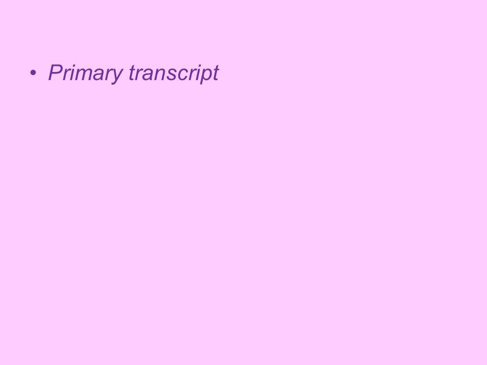 Primary transcript