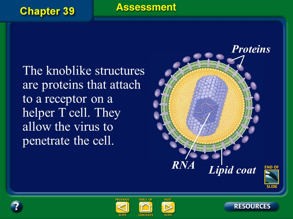 Question 2 What do the knoblike projections on the outer surface of the HIV virus do? Proteins Lipid coat RNA