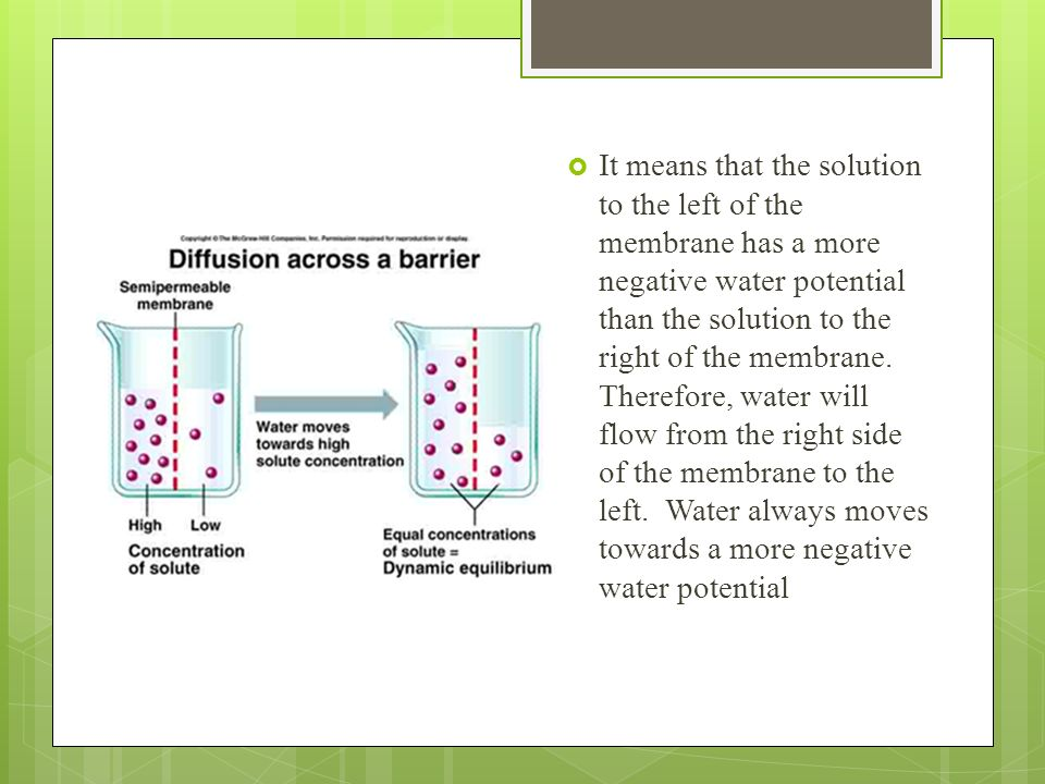 It means that the solution to the left of the membrane has a more negative water potential than the solution to the right of the membrane.