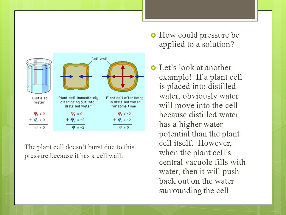 How could pressure be applied to a solution? Lets look at another example! If a plant cell is placed into distilled water, obviously water will move i