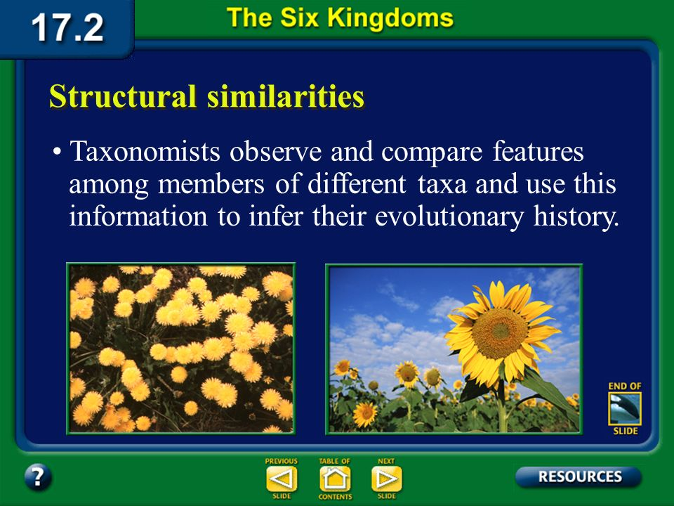 Section 17.2 Summary – pages 450-459 For example, plant taxonomists use structural evidence to classify dandelions and sunflowers in the same family,