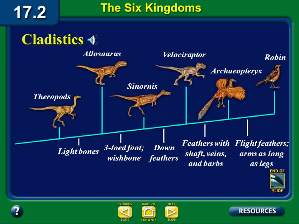 Section 17.2 Summary – pages 450-459 One biological system of classification that is based on phylogeny is cladistics (kla DIHS tiks). Cladistics Scie