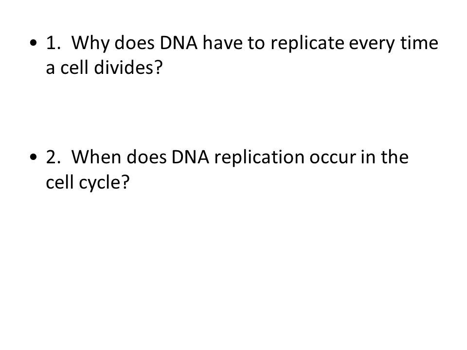 1. Why does DNA have to replicate every time a cell divides? 2. When does DNA replication occur in the cell cycle?