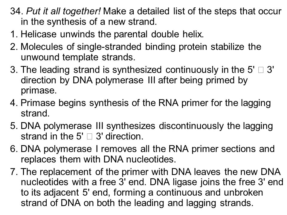 34. Put it all together! Make a detailed list of the steps that occur in the synthesis of a new strand. 1. Helicase unwinds the parental double helix.