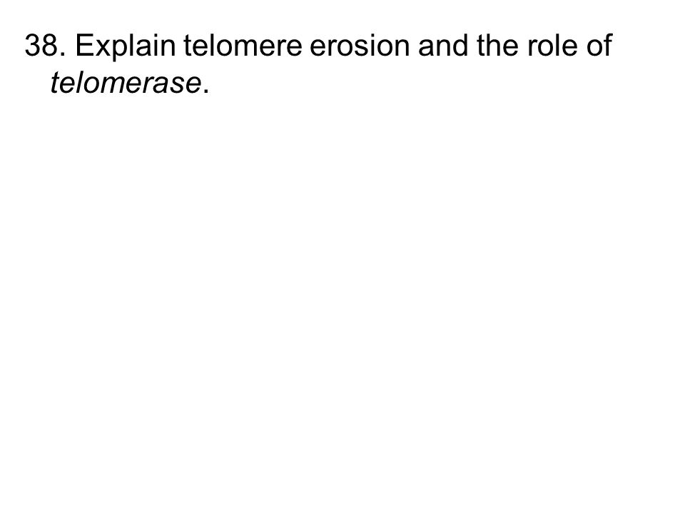 38. Explain telomere erosion and the role of telomerase.