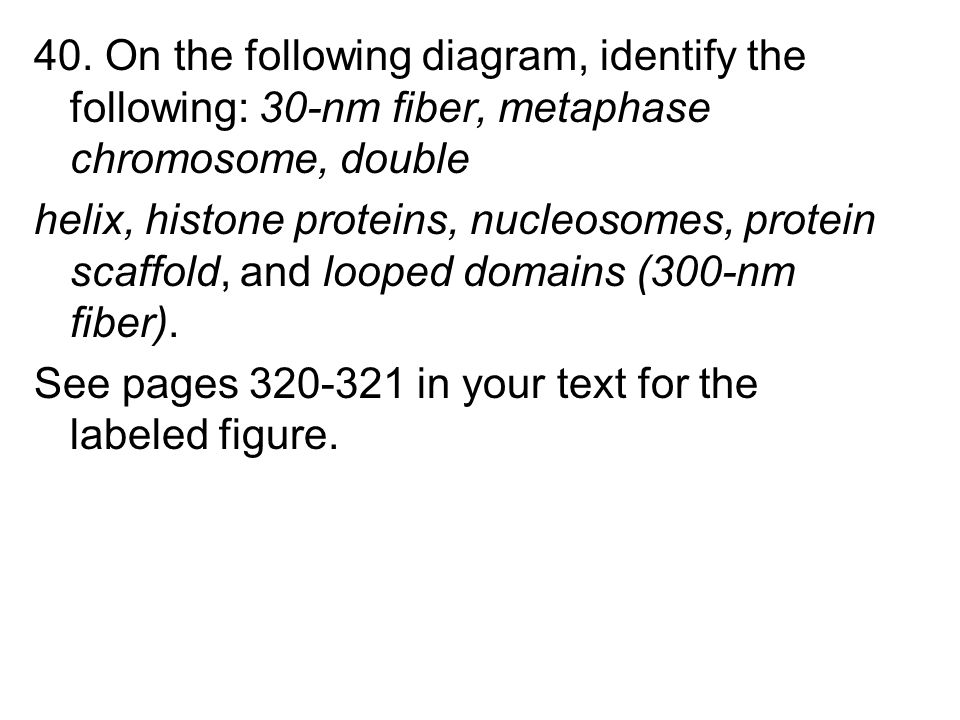 40. On the following diagram, identify the following: 30-nm fiber, metaphase chromosome, double helix, histone proteins, nucleosomes, protein scaffold