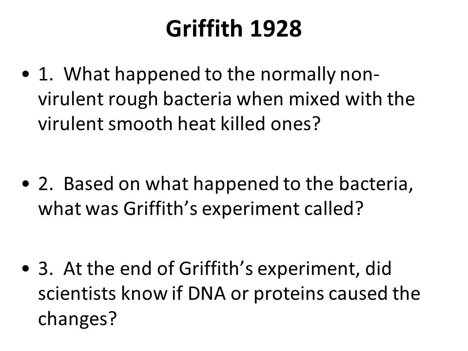 Griffith 1928 1. What happened to the normally non- virulent rough bacteria when mixed with the virulent smooth heat killed ones? 2. Based on what hap