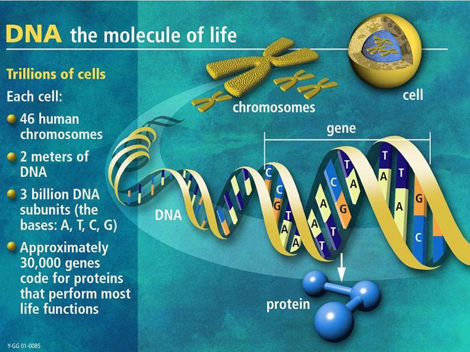Phosphate, Sugar (deoxyribose for DNA ribose for RNA), Nitrogenous base