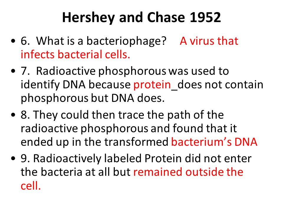 Hershey and Chase 1952 6. What is a bacteriophage? A virus that infects bacterial cells. 7. Radioactive phosphorous was used to identify DNA because p