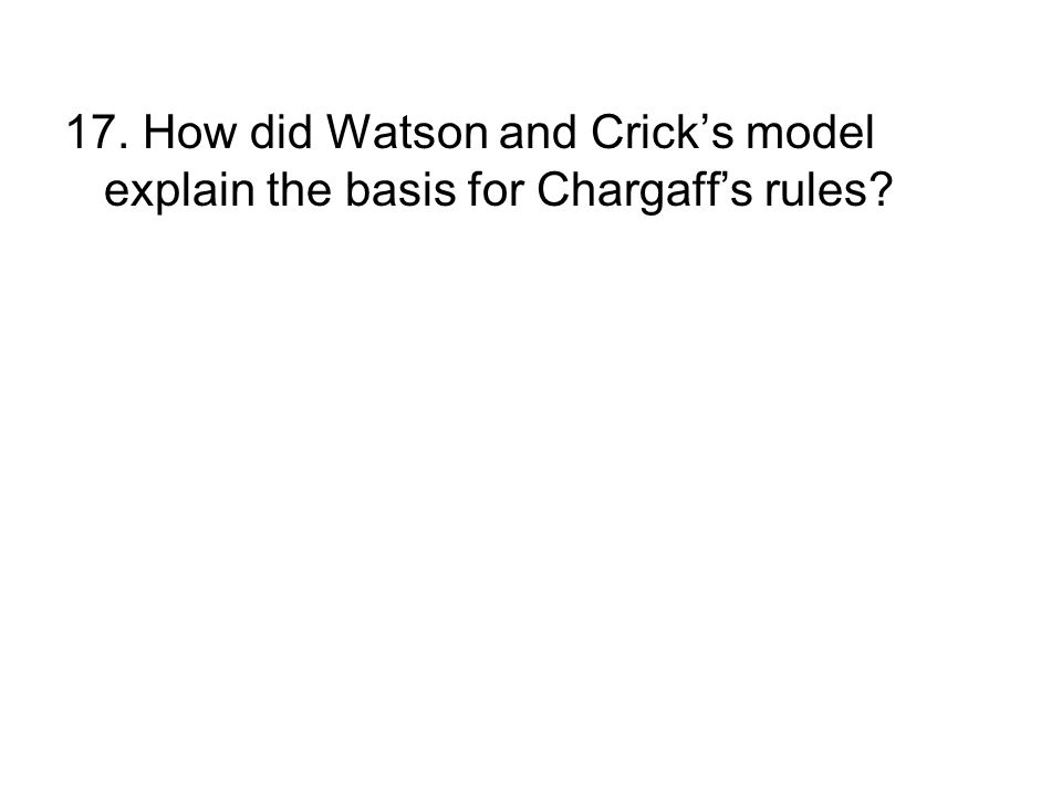 17. How did Watson and Cricks model explain the basis for Chargaffs rules?