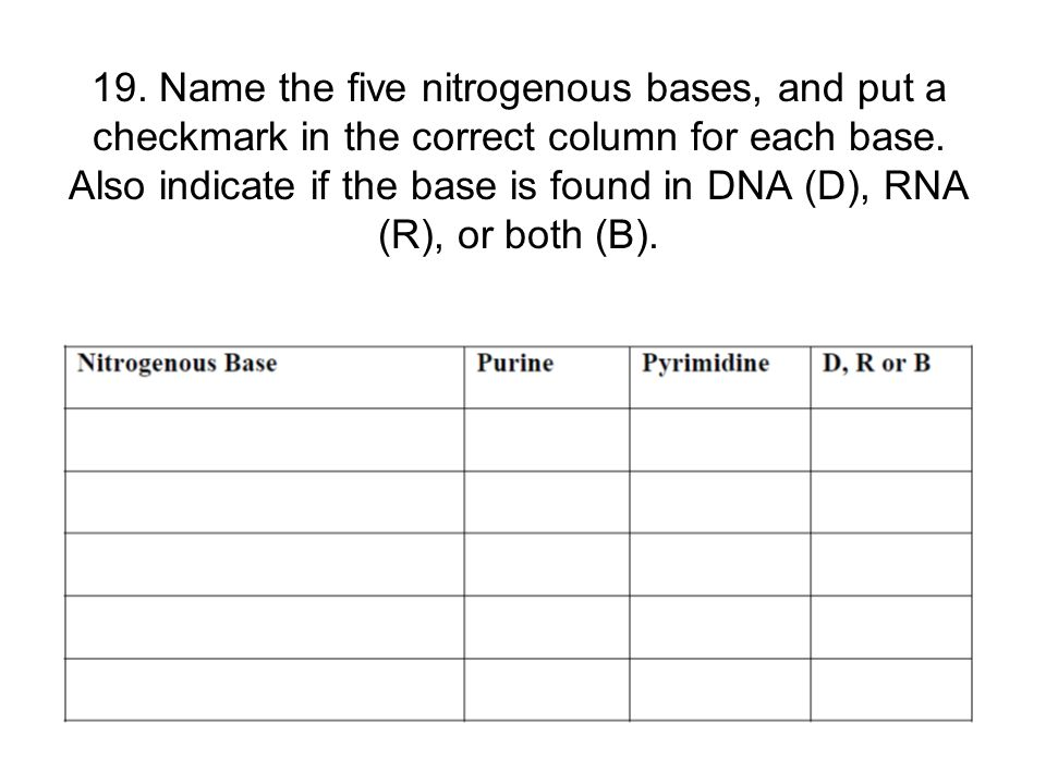 19. Name the five nitrogenous bases, and put a checkmark in the correct column for each base. Also indicate if the base is found in DNA (D), RNA (R),