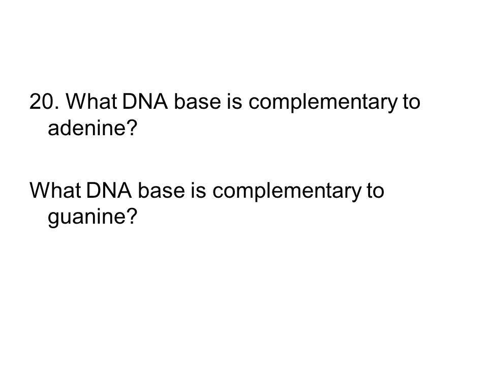 20. What DNA base is complementary to adenine? What DNA base is complementary to guanine?