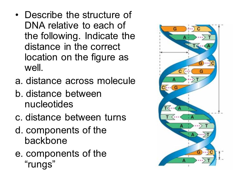 Describe the structure of DNA relative to each of the following. Indicate the distance in the correct location on the figure as well. a. distance acro