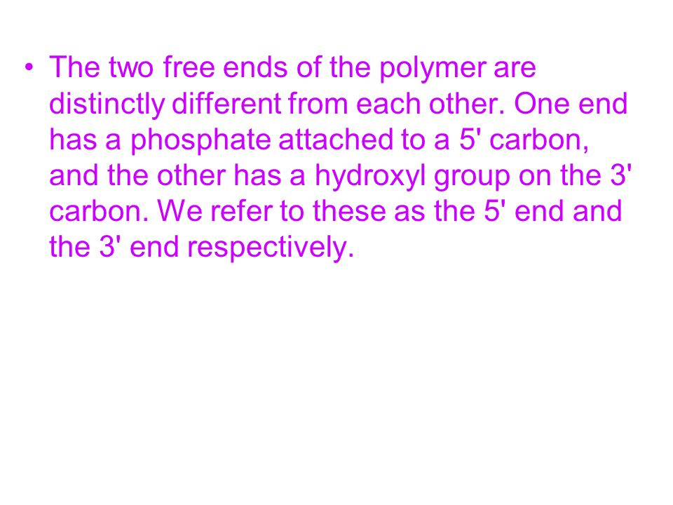 The two free ends of the polymer are distinctly different from each other. One end has a phosphate attached to a 5' carbon, and the other has a hydrox