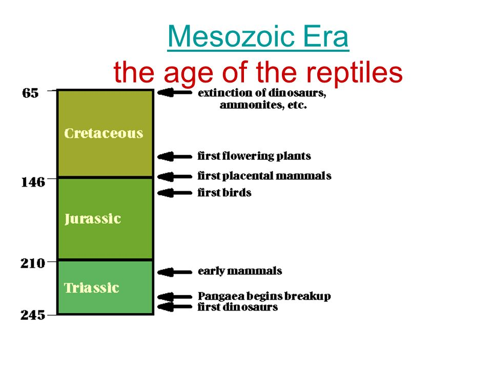Mesozoic Era the age of the reptiles