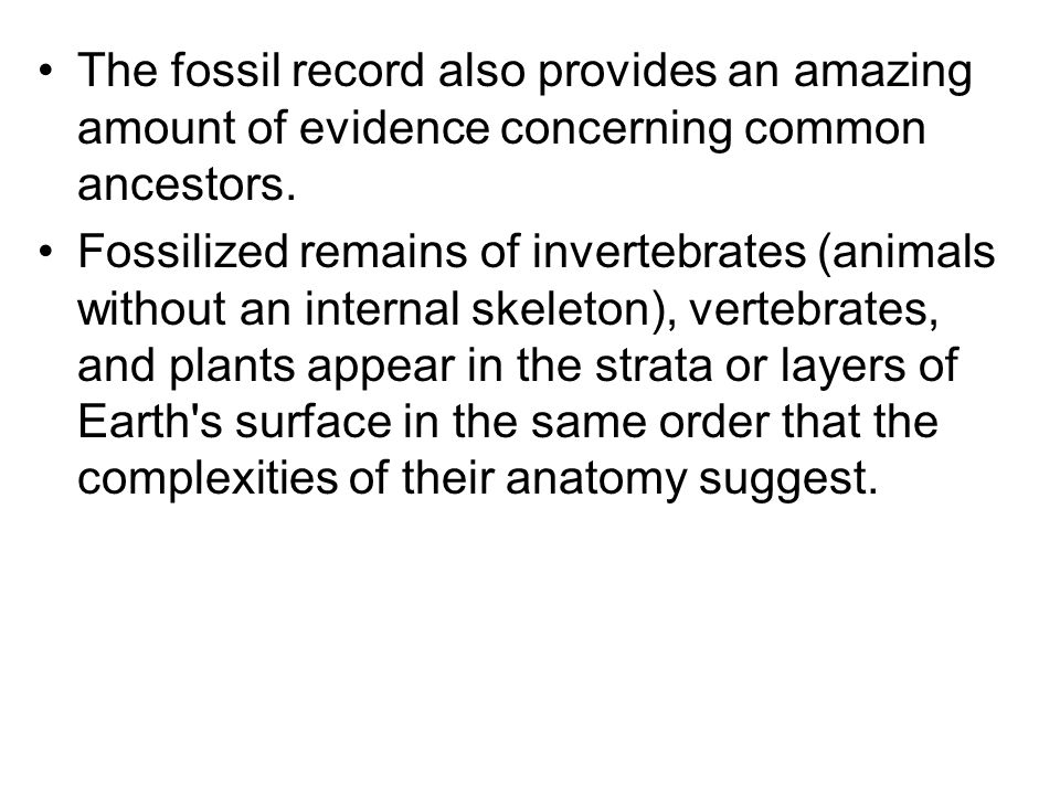 The fossil record also provides an amazing amount of evidence concerning common ancestors. Fossilized remains of invertebrates (animals without an int