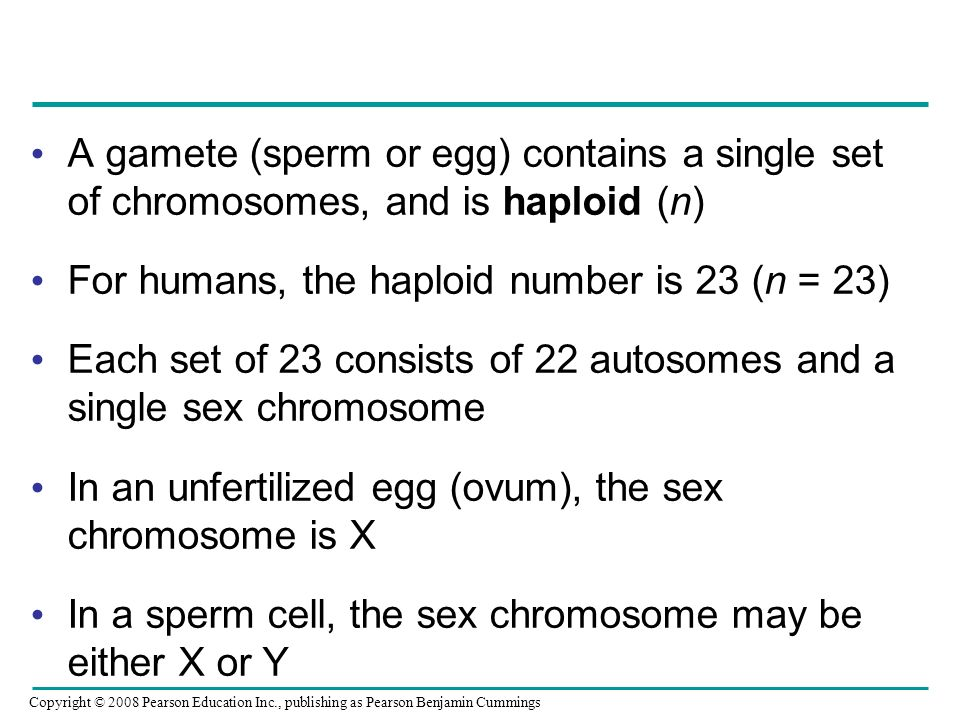 A gamete (sperm or egg) contains a single set of chromosomes, and is haploid (n) For humans, the haploid number is 23 (n = 23) Each set of 23 consists