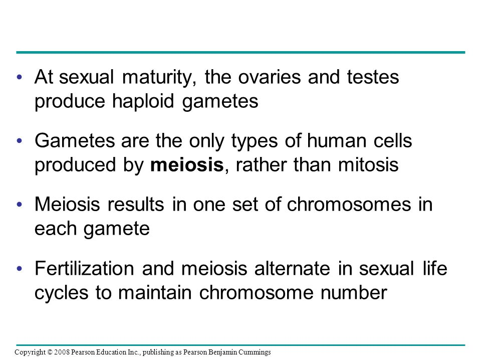 At sexual maturity, the ovaries and testes produce haploid gametes Gametes are the only types of human cells produced by meiosis, rather than mitosis
