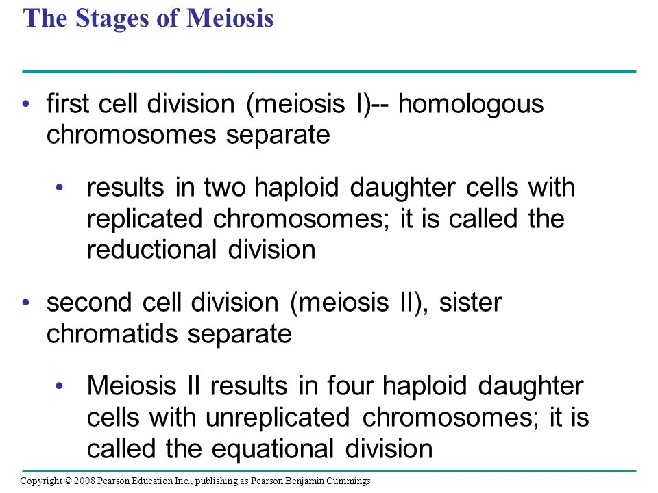 The Stages of Meiosis first cell division (meiosis I)-- homologous chromosomes separate results in two haploid daughter cells with replicated chromoso