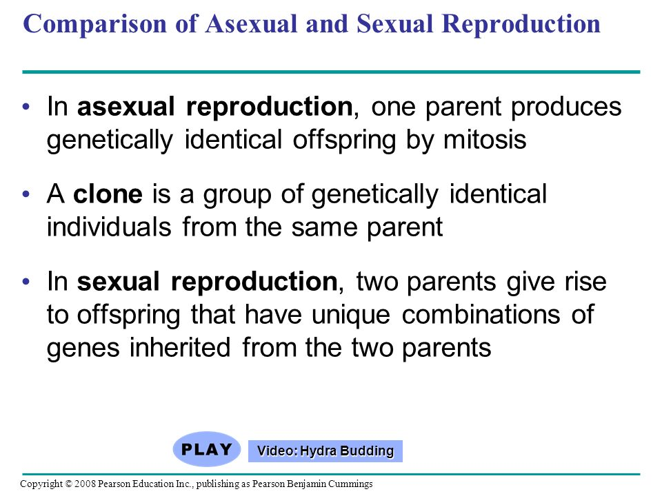 Comparison of Asexual and Sexual Reproduction In asexual reproduction, one parent produces genetically identical offspring by mitosis A clone is a gro