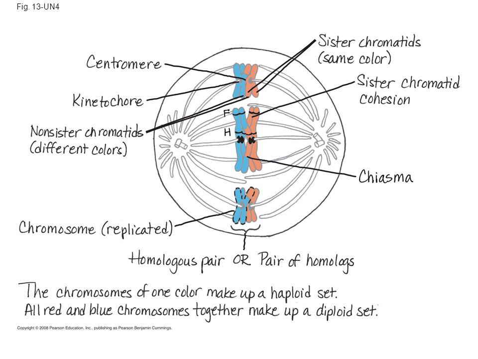 Fig. 13-UN4
