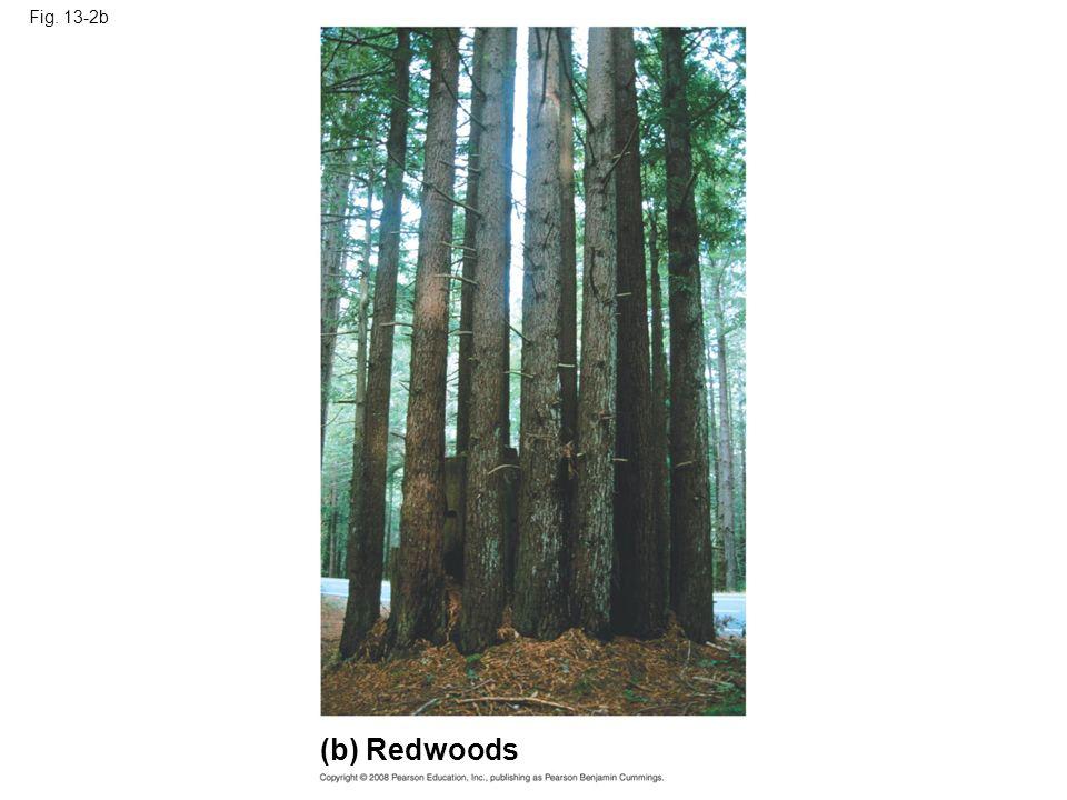 Fig. 13-2b (b) Redwoods