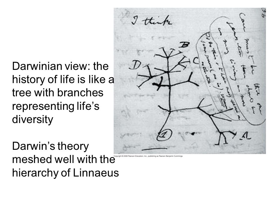 Fig. 22-7 Darwinian view: the history of life is like a tree with branches representing lifes diversity Darwins theory meshed well with the hierarchy