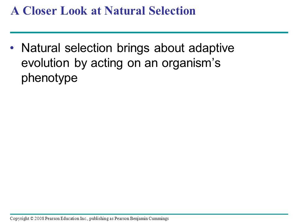 Copyright © 2008 Pearson Education Inc., publishing as Pearson Benjamin Cummings A Closer Look at Natural Selection Natural selection brings about ada