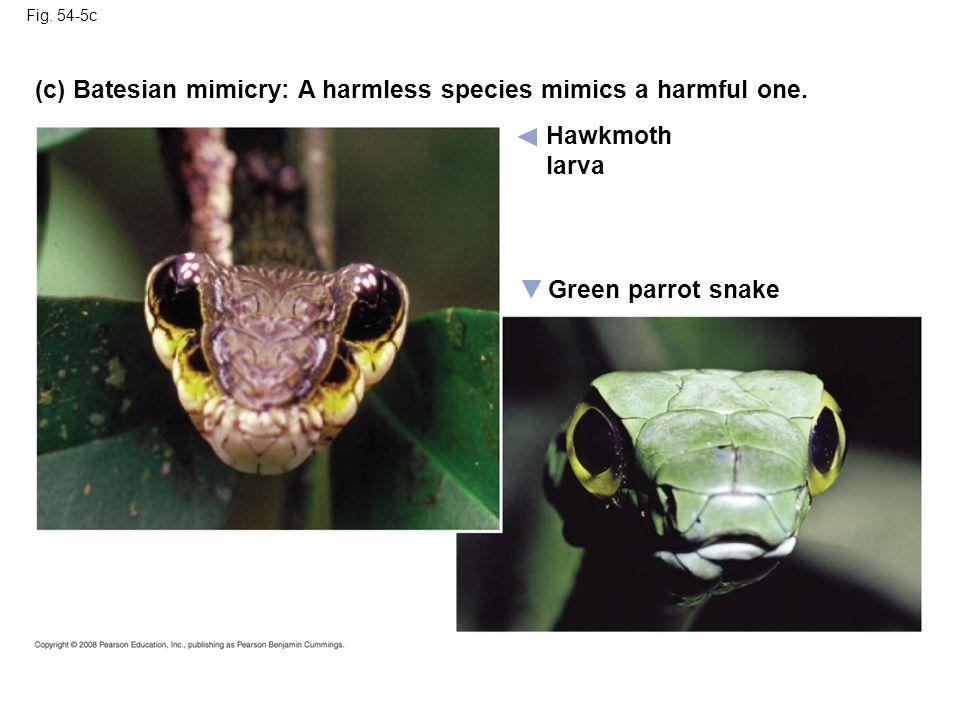 Fig. 54-5c Hawkmoth larva (c) Batesian mimicry: A harmless species mimics a harmful one. Green parrot snake