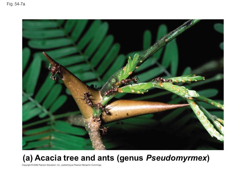 Fig. 54-7a (a) Acacia tree and ants (genus Pseudomyrmex)