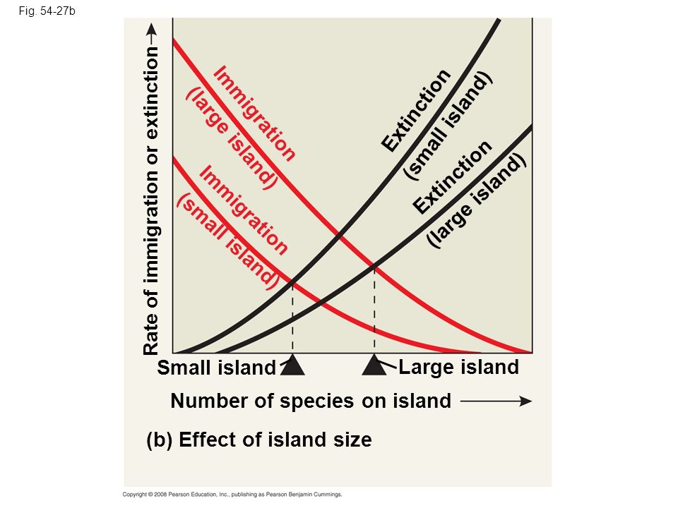 Fig. 54-27b Rate of immigration or extinction Number of species on island (b) Effect of island size Small island Large island (large island) Immigrati