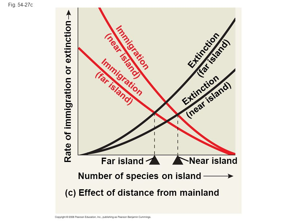 Fig. 54-27c (c) Effect of distance from mainland Number of species on island Rate of immigration or extinction Far island Near island Immigration (far
