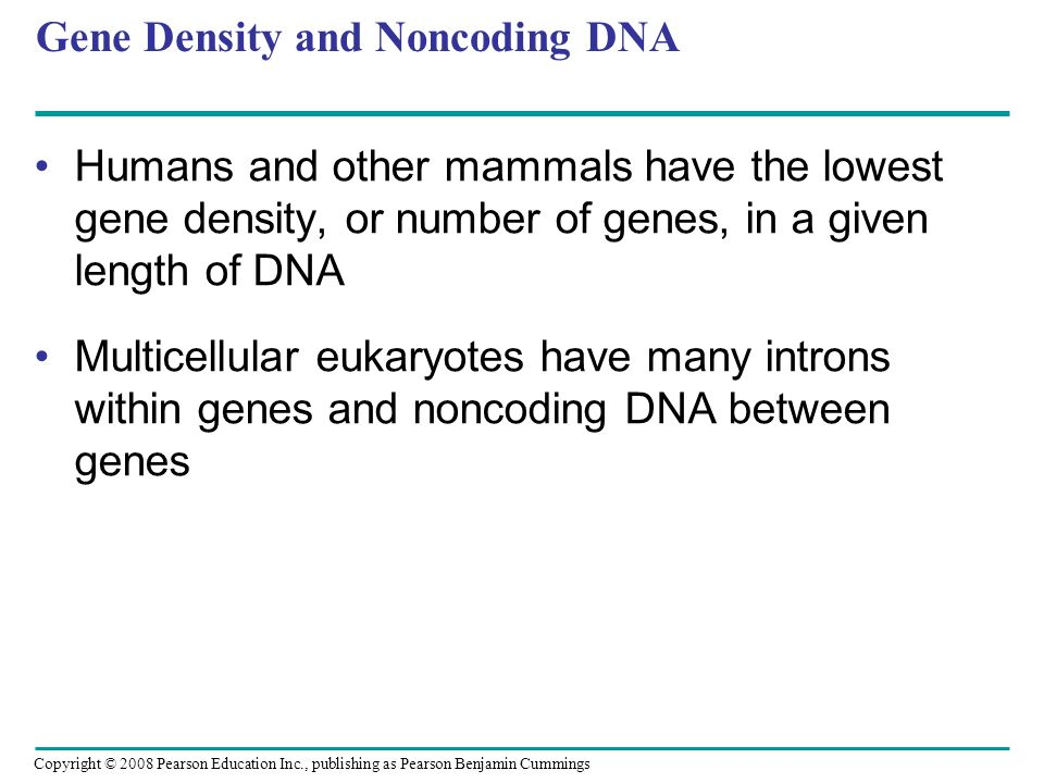 Copyright © 2008 Pearson Education Inc., publishing as Pearson Benjamin Cummings Gene Density and Noncoding DNA Humans and other mammals have the lowe